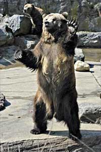 Farewell-bear